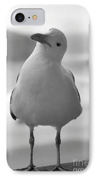 IPhone Case featuring the photograph Curious Gull by Chris Scroggins