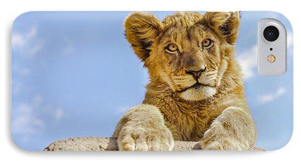 Curious Lion Cub IPhone Case by Diane Diederich