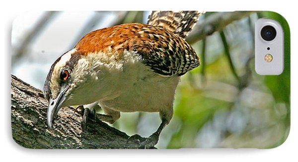IPhone Case featuring the photograph Curious Rufous-naped Wren by Peggy Collins