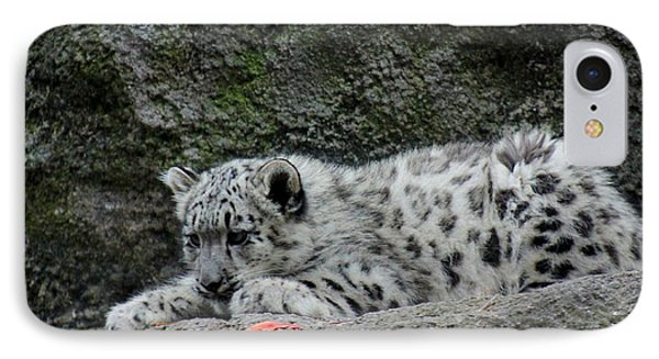 Curious Snow Leopard Cub IPhone Case