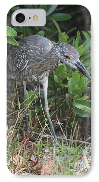 Curiously Night Heron Chick IPhone Case by Christiane Schulze Art And Photography