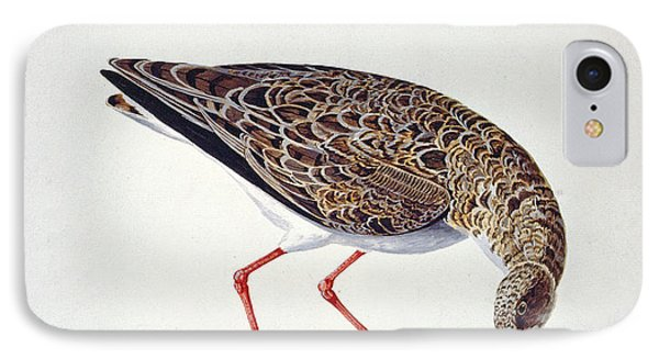 Sandpiper iPhone 7 Case - Curlew Sandpiper by Charles Collins