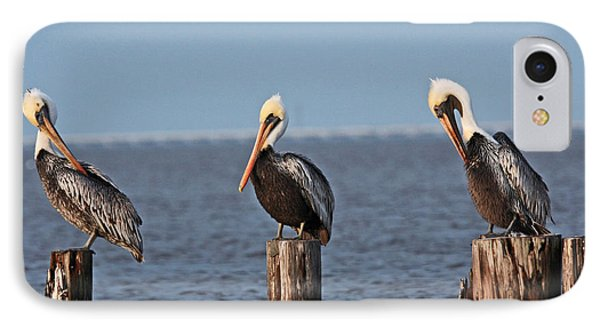Curly Moe And Larry Pelicans IPhone Case by Luana K Perez