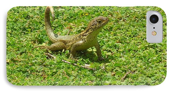 Curly-tailed Lizard IPhone Case
