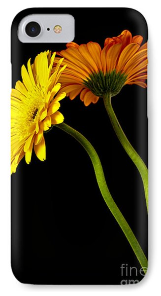 Curvaceous Daisies IPhone Case by Pattie Calfy