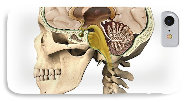 Cutaway View Of Human Skull Showing Phone Case by Leonello Calvetti