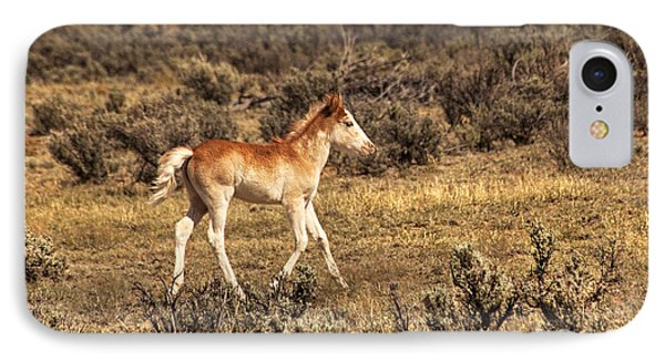 Cute Colt Wild Horse On Navajo Indian Reservation  IPhone Case