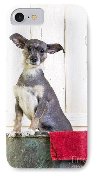 Cute Dog Washtub IPhone Case by Edward Fielding