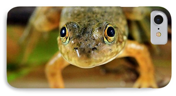 Cute Frog Face IPhone Case by Dan Sproul