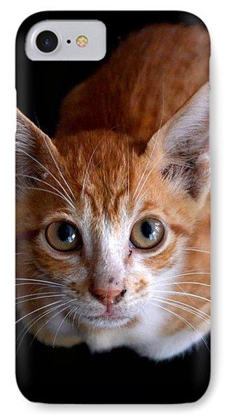Cute Kitten IPhone Case