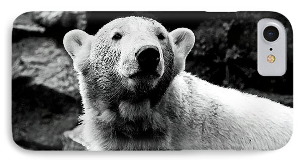 Cute Knut Phone Case by John Rizzuto