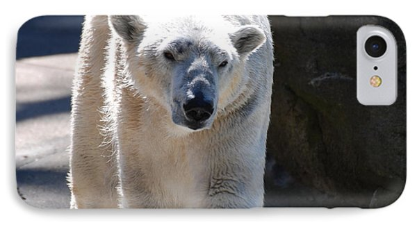 Cute Polar Bear  IPhone Case by DejaVu Designs