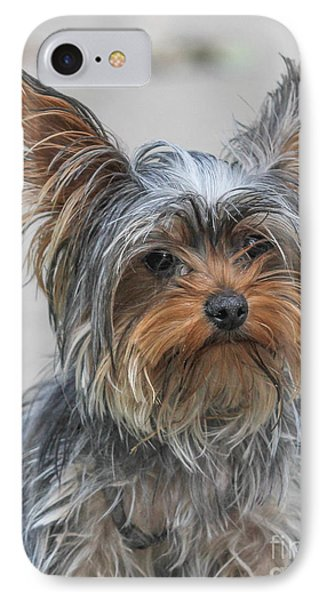 Cute Yorky Portrait IPhone Case by Jivko Nakev