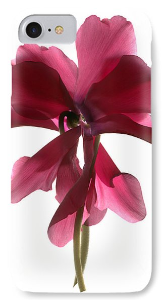 Cyclamen Dance IPhone Case by Julia McLemore
