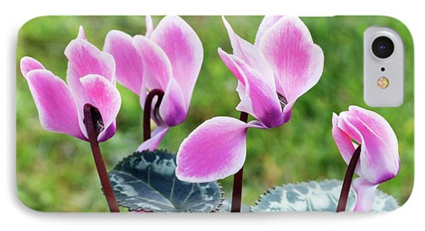 Cyclamen Hederifolium 'metis' IPhone Case by Ann Pickford