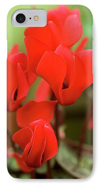 Cyclamen Persicum 'mini Scarlet' IPhone Case by Adrian Thomas