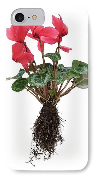 Cyclamen Sp. Plant In Flower IPhone Case by Trevor Clifford Photography