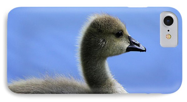 IPhone Case featuring the photograph Cygnet by Alyce Taylor