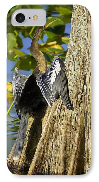 Cypress Bird IPhone Case by Laurie Perry