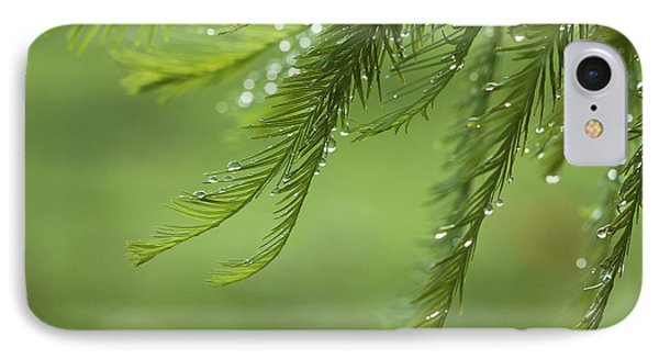 IPhone Case featuring the photograph Cypress In The Mist - Art Print by Jane Eleanor Nicholas