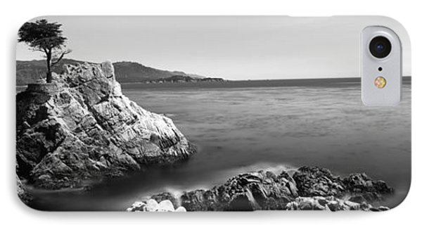 Cypress Tree At The Coast, The Lone IPhone Case by Panoramic Images