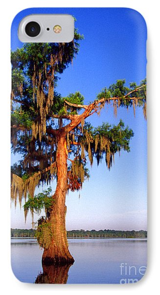 Cypress Tree Draped In Spanish Moss IPhone Case