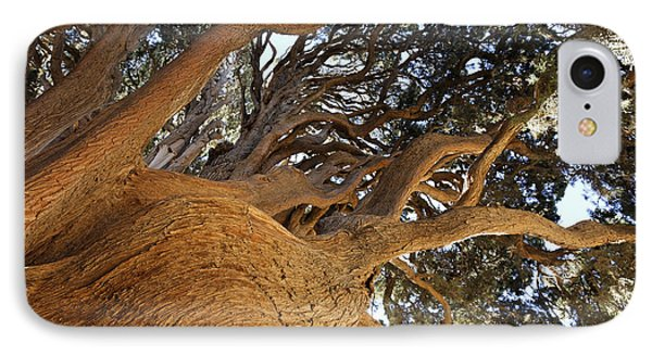 Cypress Tree In Iran IPhone Case by Robert Preston
