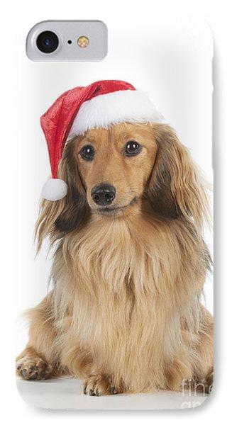 Dachshund In Christmas Hat IPhone Case by John Daniels