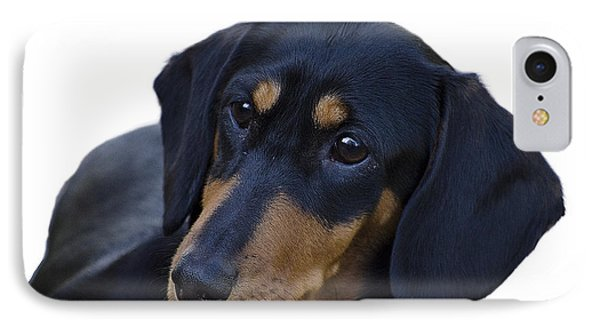 Dachshund Phone Case by Linsey Williams