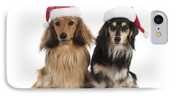 Dachshunds In Christmas Hats IPhone Case by John Daniels