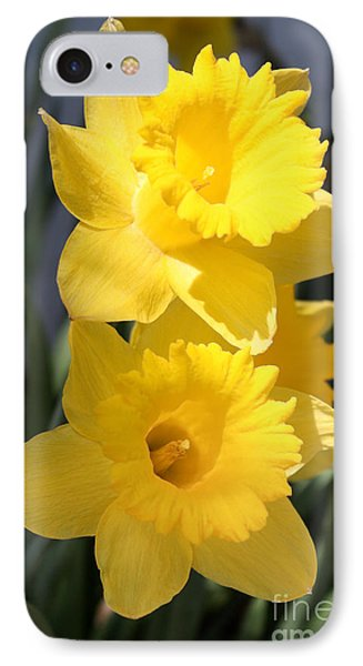 Daffodil Delight IPhone Case by Anita Oakley