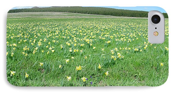Daffodil Flowers In A Field, Les IPhone Case by Panoramic Images
