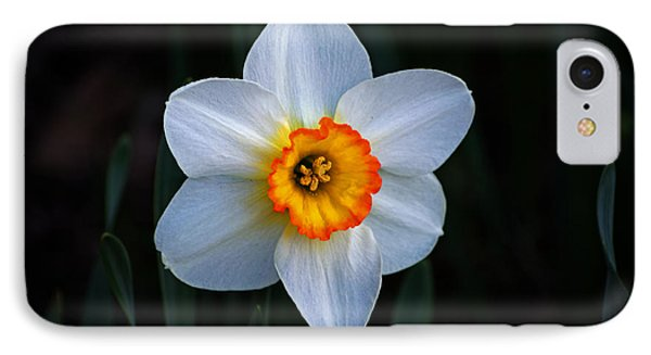 IPhone Case featuring the photograph Daffodil In Riverside Park by Bill Swartwout