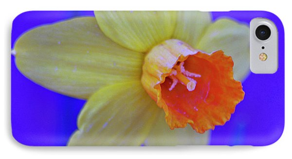 IPhone Case featuring the photograph Daffodil On Blue by Juls Adams