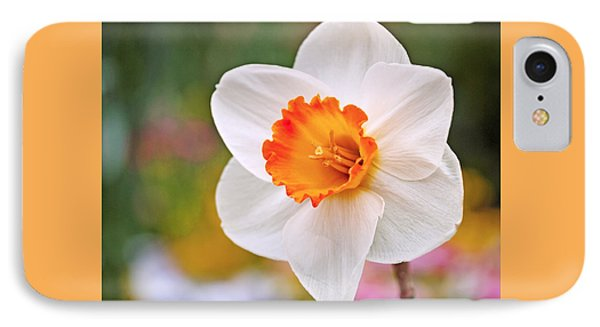 Daffodil  IPhone Case by Rona Black
