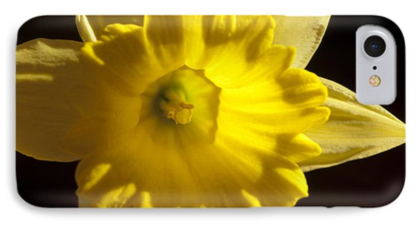 IPhone Case featuring the photograph Daffodile by Haleh Mahbod