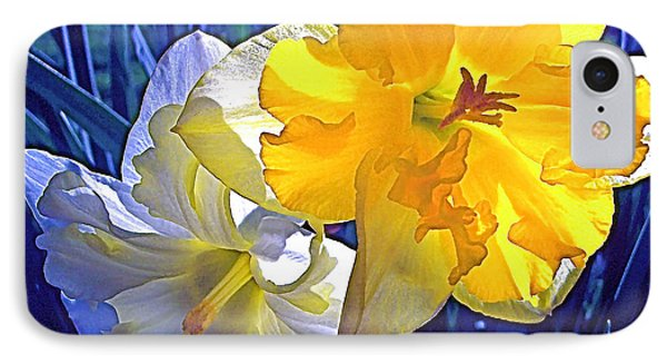 Daffodils 1 IPhone Case by Pamela Cooper