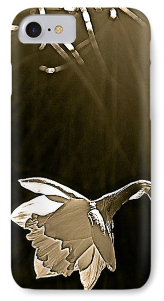 IPhone Case featuring the photograph Daffodils 2 by Pamela Cooper