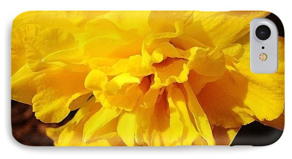 Daffodils Are Blooming IPhone Case by Christy Beckwith