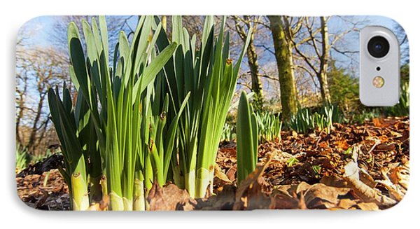 Daffodils In Spring In Ambleside IPhone Case