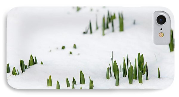 Daffodils Pushing Up Through The Snow IPhone Case