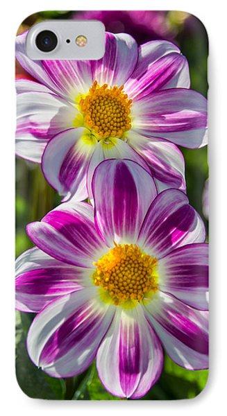 Dahlia 3 IPhone Case