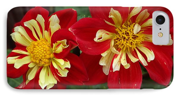 IPhone Case featuring the photograph Dahlia by Alan Lakin