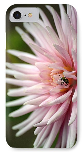 Dahlia Bug IPhone Case by Chris Anderson