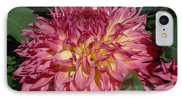 Dahlia IPhone Case by Christiane Hellner-OBrien