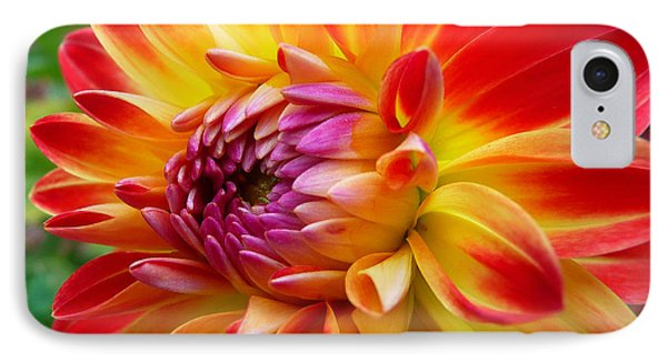 Dahlia IPhone Case by Dan Myers