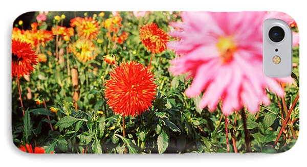 Dahlia Flowers In A Park, Stuttgart IPhone Case by Panoramic Images
