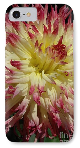 Dahlia II IPhone Case by Christiane Hellner-OBrien