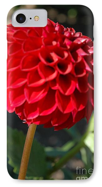 Dahlia IIi IPhone Case by Christiane Hellner-OBrien