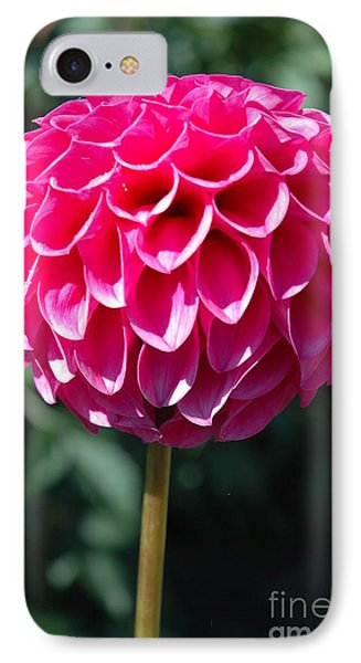 Dahlia IIII IPhone Case by Christiane Hellner-OBrien
